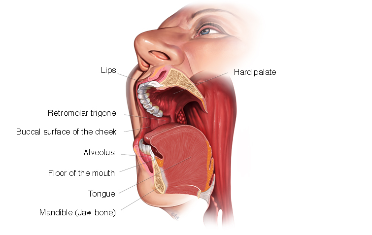 Oral Cancer Diagram